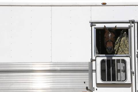 """""""Good I Will Be,"""" a horse that sold for $775,000, sits in a trailer on his way to his new home on the second day of the federal auction at the Rita Crundwell ranch in Dixon."""