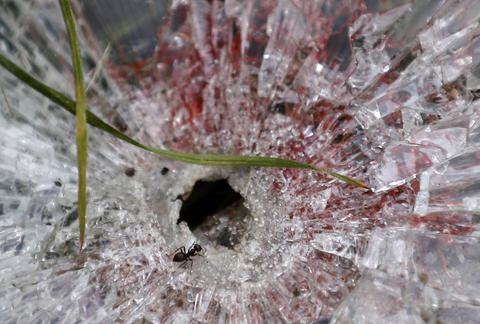 """An ant crawls near the blood-stained bullet hole in a window of a truck of supporters of the self-proclaimed """"Donetsk People's Republic"""" on a road leading to the Donetsk International Airport, in Donetsk, Ukraine, on May 27."""