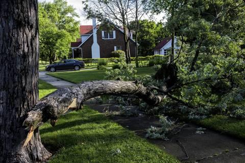 A tree downed in last night's storms blocks a sidewalk in Flossmoor