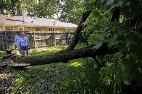 Shelley Strasser-Holland looks at a fallen tree in the backyard of her neighbor Darryl Mayfield in Flossmoor. The tree fell on the power lines during last night's storms.
