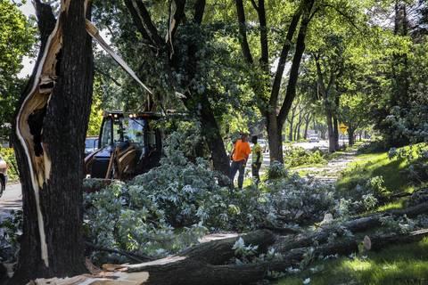 Workers survey downed trees along Flossmoor Road in Flossmoor.