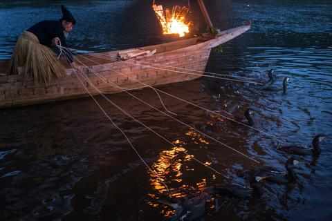 "A cormorant master prepares his sea cormorants for the nights ""Ukai"" on July 2, 2014 in Gifu, Japan."