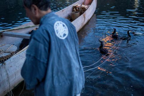 "A boatman holds onto sea cormorants with the hand strings as he prepares the birds for the nights ""Ukai"" on July 2, 2014 in Gifu, Japan."