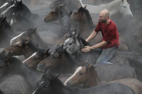 "A reveller tries to hold on to a wild horse during the ""Rapa Das Bestas"" traditional event in the Spanish northwestern village of Sabucedo July 5, 2014. On the first weekend of the month of July, hundreds of wild horses are rounded up, trimmed and groomed in different villages in the Spanish northwestern region of Galicia."