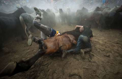 """Aloitadores"" (fighters) struggle with a wild horse during the ""Rapa Das Bestas"" (Shearing of the Beasts) traditional event in the Spanish northwestern village of Sabucedo, some 40 kms from Santiago de Compostela, on July 5, 2014. During the 400-year-old horse festival, hundreds of wild horses are rounded up from the mountains, trimmed and groomed."