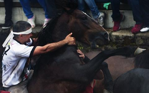 "An ""aloitador"" (fighter) struggles with a wild horse during the ""Rapa Das Bestas"" (Shearing of the Beasts) traditional event in the Spanish northwestern village of Sabucedo, some 40 kms from Santiago de Compostela, on July 5, 2014. During the 400-year-old horse festival, hundreds of wild horses are rounded up from the mountains, trimmed and groomed."