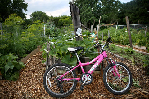 A pink bike sits among the garden plots. The refugee garden on Lawrence Avenue in Chicago is a forest of lovingly cared for vegetables and herbs on Sunday July 20.