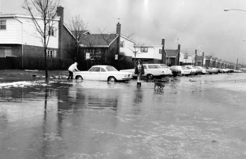 April 18, 1969: Jean Scahill, 13, and her dog walk down a flooded Nordica Street in Niles.