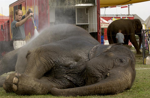 Sept. 17, 2002: Circus owner David Rawls washes down one of three elephants prior to the Kelly Miller Circus show. The circus had a two-night stand at Naper Settlement after shows in Algonquin and Wilmette.