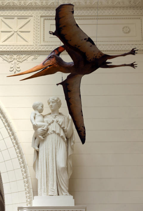A pterodactyl hangs above the main hall at the Field Museum.