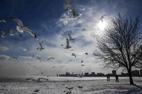 People are feeding birds along Montrose Drive at Lake Michigan in Chicago.