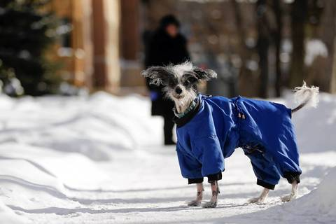 Cholle is out for a walk in Rogers Park, wearing her winter coat against the cold.