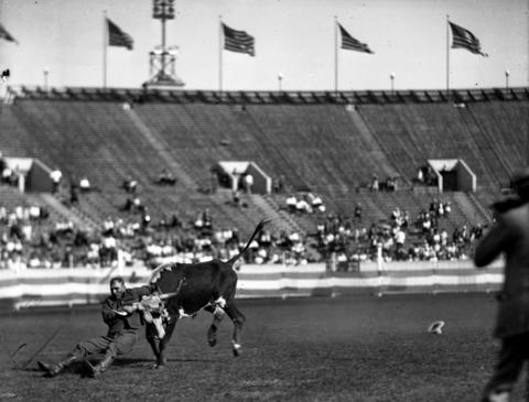 Mike Hastings of Fort Worth, Texas, at Chicago's third annual World Championship Rodeo held at Soldier Field in Aug. 1927. Hastings won first place in 1927 when he threw his steer in 13 seconds.