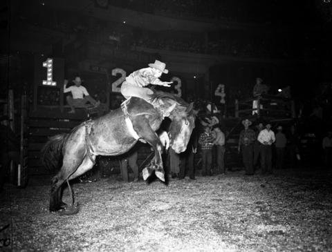 "Ed Warhol of Minneapolis on ""Dick Tracy"" in the bareback bronco contest during Chicago's World Championship Rodeo held at the Chicago Stadium in Oct. 1946."