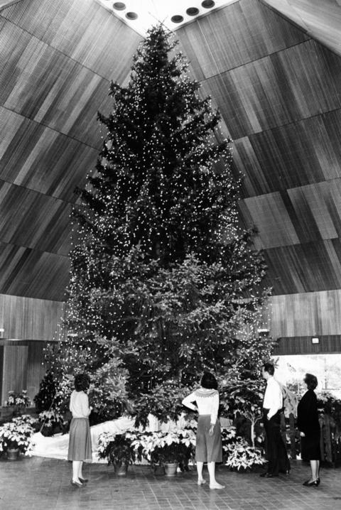 Dec. 6, 1985: A 47-year-old Colorado blue spruce goes out in a blaze of holiday glory at the Botanic Gardens' Christmas celebration in Glencoe.