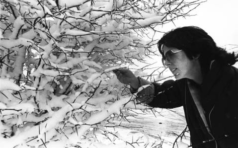 Dec. 6, 1983: Fran Wilkinson looks at a snow-covered bush at the Bolingbrook Commons Shopping Center.