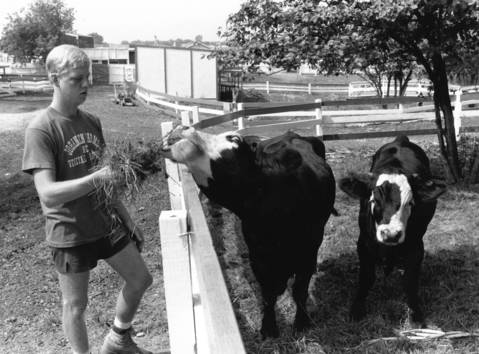 Sept. 7, 1990: Cory Johansen feeds Panda and her calf at Storytime Zoo in Bolingbrook.