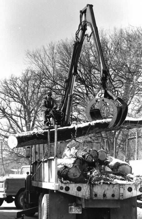 March 7, 1990: David R. Haney removes logs with Dutch Elm Disease from the Bemis Woods Forest Preserve in Western Springs.
