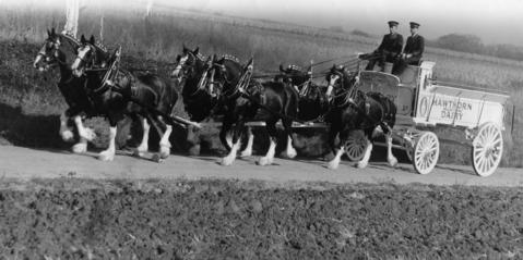 Oct. 31, 1945: Canadian Champion Six-Horse Hitch (six black Clydesdale horses, each with four white legs) especially purchased and imported by Hawthorn-Mellody Farms for exhibition at the Chicago Horse Show.