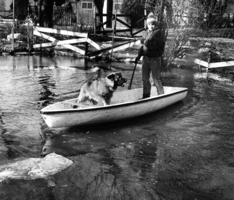 March 13, 1982: John Harvey, 13, and his reluctant dog Sam explore their newly flooded backyard after a sudden rise in temperatures and overnight rains turned much of the town into a lake.