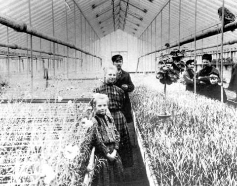 1900: Peter Dahm's greenhouse, which was located on Gross Point Road north of Dempster St.