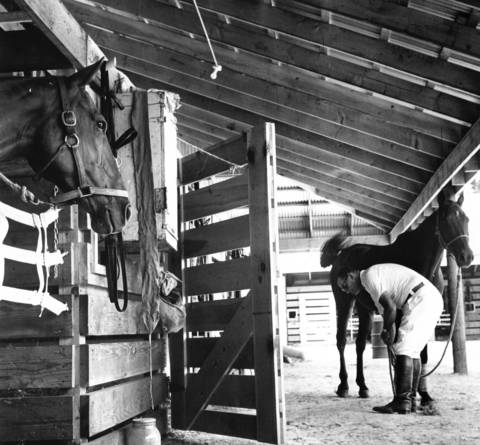 Sept. 11, 1957: Billy Barry checks his horse at the stables at the Oak Brook Polo Club.