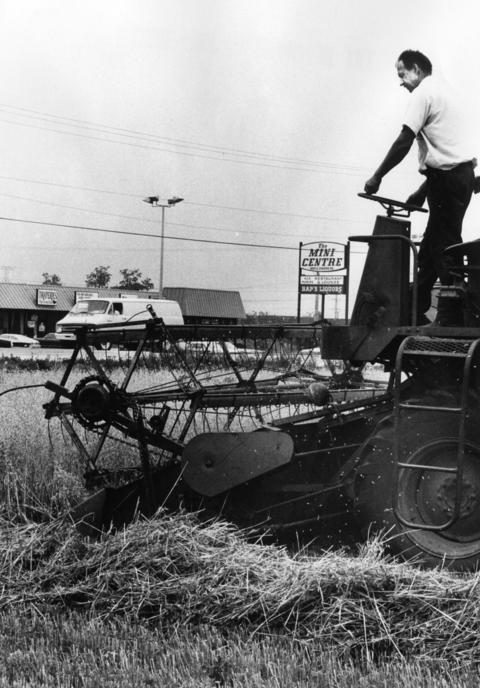July 26, 1977: Allen Busse works his combine in a field of oats at Allen Busse Farm, 955 E. Higgins Rd. in Elk Grove Village.