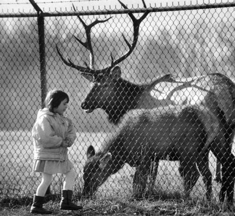 Dec. 6, 1989: Stephanie Rilley, 5, of Bensenville, gets to know a couple of elk at the Busse Woods Forest Preserve in Elk Grove Village. They are among the herd from which the village takes its name.