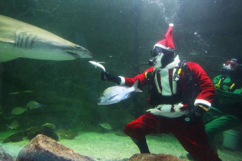Santa Claus feeds the sharks during a visit to the Manly SEA LIFE Sanctuary on December 18, 2013 in Sydney, Australia.