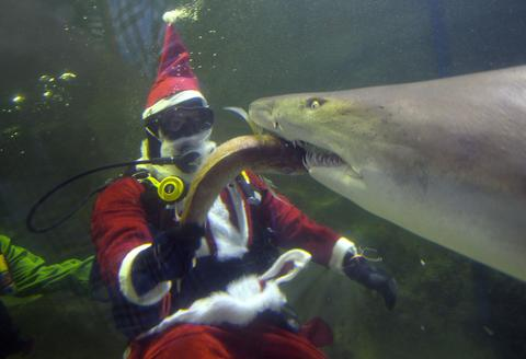 A diver dressed as Santa Claus feeds a shark at the Manly Sea Life Sanctuary in Sydney on December 18, 2013. School children along with tourists visited to watch Santa Claus feeding fish at different times of the day in conjunction with Christmas festivities.