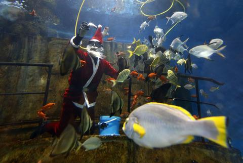 A diver dressed as Santa Claus feeds fish inside a fish tank at the Malta National Aquarium in Qawra, outside Valletta, December 18, 2013.