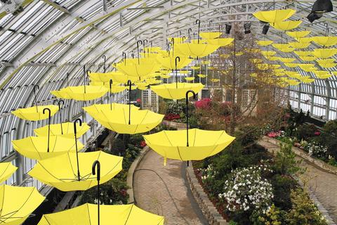 """Spring Flower Show at Garfield Park No umbrella on a rainy day? No problem! Garfield Park Conservatory has 200 of them, suspended from the glass ceiling. Its """"Sun Showers"""" exhibit celebrates the restoration of the show house after the devastating 2011 hailstorm, and the annual spring flower show displays hundreds of azaleas, camellias, daffodils, hyacinths and orchids in their full glory, rain or shine, before they're blooming elsewhere in the city. Daily through May 10 at Garfield Park Conservatory, 300 N. Central Park Ave. (773-746-5100, garfield-conservatory.org). Free."""