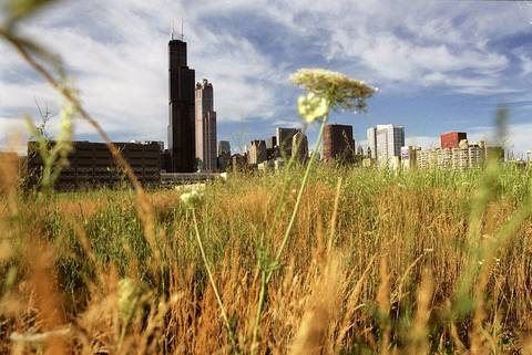 A view of the Sears Tower in 2002 from Roosevelt Road where a small patch of prairie grows between the railroad tracks and downtown.