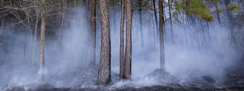 Smoke fills the woods near Zack Road on Thursday evening in Gloucester after a forestry official created a backfire to contain a wildfire burning near private property.