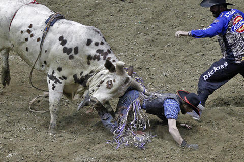 Derek Brumitt is pinned to the ground by bull, I'm Nuts, while competing in the Pro Bull Riders Blue DEF Velocity Tour at the Hampton Coliseum Saturday evening.   No Mags, No Sales, No Internet, No TV, No Redistribution