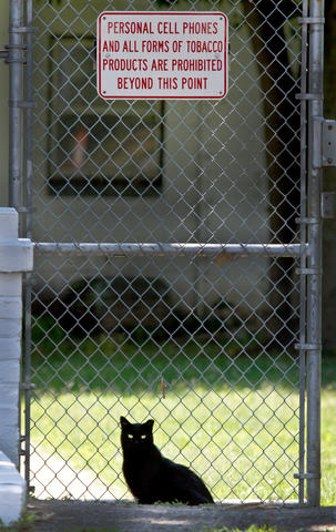 All inmates have been removed from the City Farm prison facility in Midtown Newport News. The inmates are now in downtown Newport News jails. Most city farm's staff members have been moved to other jobs in the city. This lone cat at one of the gates at the city farm.