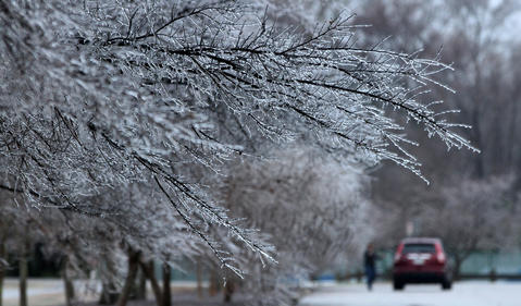 Ice coats the limbs of trees at Riverview Farm Park early Wednesday in Newport News, Virginia after an evening of freezing rain and sub-zero temperatures.