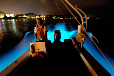 As VIMS research tech, Joe Cope, drives a boat in the York river phytoplankton known as dinoflagellates glow in the wake Tuesday night. The algae are a plant the blooms when conditions are right in the water.