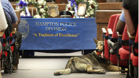 Moved inside to the eight floor of City Hall because of the rain, K-9 Saber waits patiently with his handler, SPO Larry McCay, both of whom will receive a Lifesaving Award at the annual Hampton Police Department's Honor Awards and police Memorial Service.