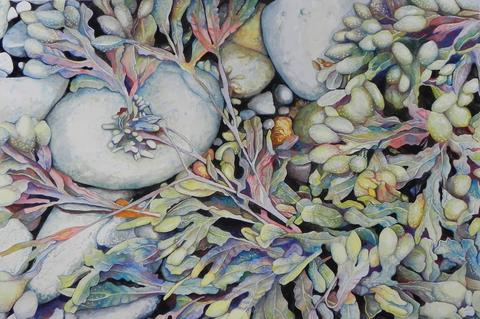 """Microcosm: Finding Patterns in Tiny Worlds,"" an exhibit of work by members of the Guild of Natural Science Illustrators, will be at Highstead, 127 Lonetown Road in Redding,from Sept. 20, when it opens with a reception from 1 to 3 p.m., until Oct. 30. The artists are Judy Aronow, Mary Christiansen, Corinne Folsom-O'Keefe, Susanne Graedel, Stella Grove, Linda Hackett, Ann S. Hoffenberg, Elayne Leighton, Dorie Petrochko, Dick Rauh, Marilyn Reilly, Clara Richardson, Sharon Rowley Morgio, Stephen Sepe, Sarah Saltus Siddig, Beverly Simone, Linda Thomas, Frances Topping and Suzanne Wagner. This is by Sepe. Gallery hours are weekdays 9 a.m. to 4 p.m. www.highstead.net."