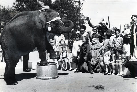 1967: An elephant performs tricks for kids and clowns at the opening of the park's children's concert series.