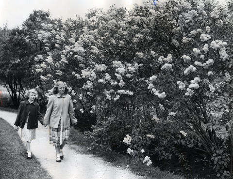 Joyce Small, left, and Janet Fritz stroll past one of the hundreds of lilac bushes in bloom in Lilacia Park.