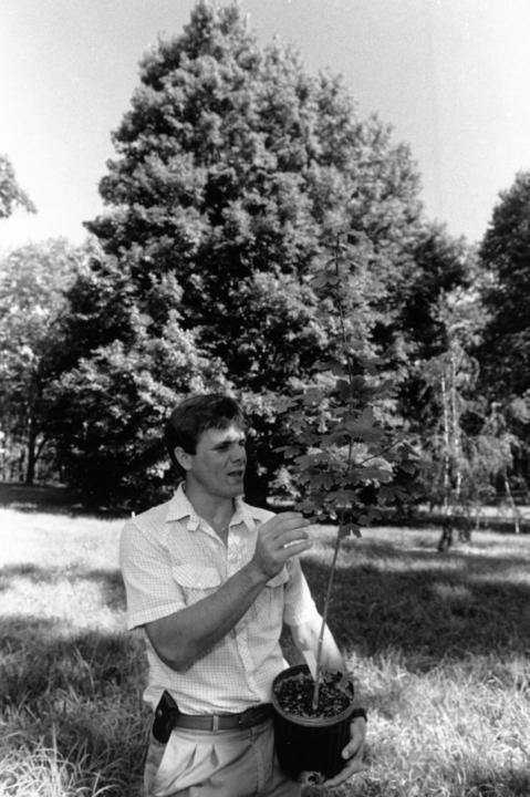 September 1989: In front of a 6-year-old miyabe maple, Morton Arboretutm horticulturist Kris Bachtell holds a young potted specimen of the tree. Tissue culture has now made it practical to reproduce this overlooked tree in large numbers.