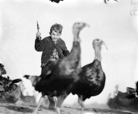 Friedman Law, 10, runs after turkeys with a hatchet on his family's farm in Mount Carroll, Ill., in November 1940.