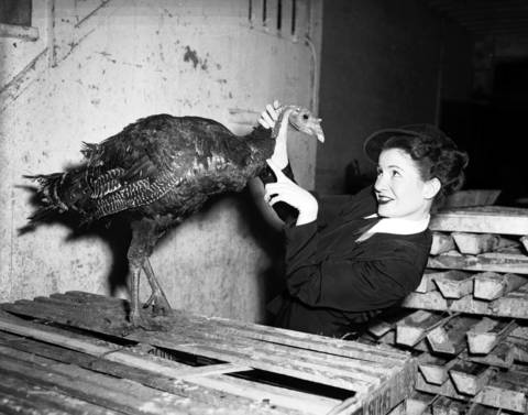 Joan Cranston and a turkey on Randolph Street in Chicago in November 1947.