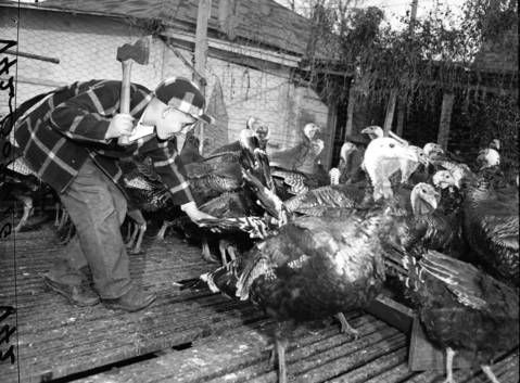 Ronald Hausermann, 11, tries to catch a turkey for his Thanksgiving dinner in Addison, Ill., on Nov. 18, 1950.