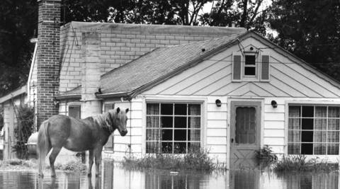 August 1972: A horse stands in floodwaters on Victory Parkway, east of Wooddale Road in Addison.