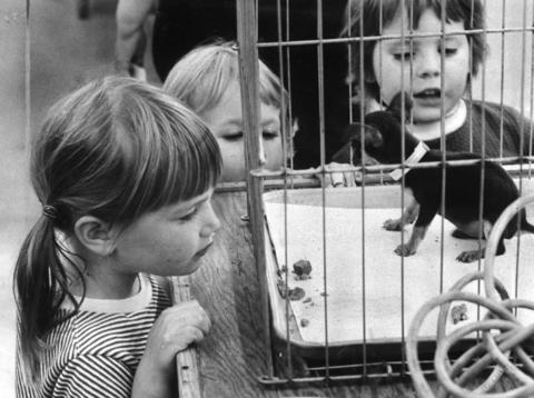 June 20, 1974: A Chihuahua enjoys the attention it's getting from interested children at Lambs Pet Store.