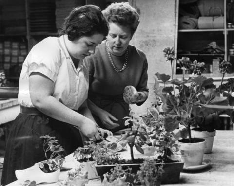 May 13, 1962: Corrine Owen (right) looks on as Marge works at potting plants. Plants are one of the items on sale at the pet shop.