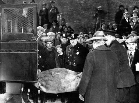 Curious spectators and friends and family of the dead rush to the scene of the St. Valentine's Day massacre to identify the victims.